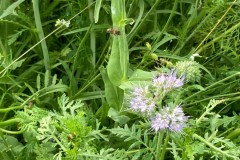 Oetinghauser Alm, Biene im Anflug